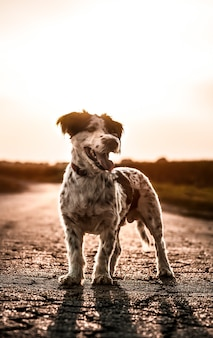 Vertical shot of a dog standing outdoors at sunset looking sideways