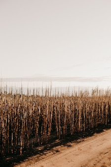 Vertical shot of dried grasses near the road during daytime