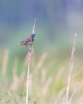 Vertical shot of a european swallow perched on a dry plant