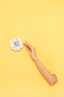 Vertical shot of a female's arm grabbing a rose over a yellow wall