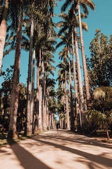 Colpo verticale di una donna che cammina su una strada coperta di palme nel giardino botanico di rio de janeiro