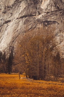 Vertical shot of a field with dry trees and a huge rock