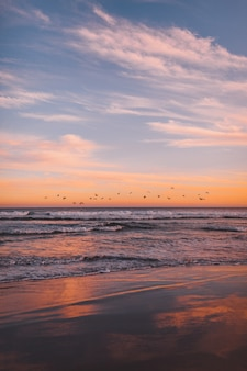 Vertical shot of a flock of sea birds flying over the sea during sunset