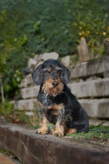 Colpo verticale di un cane carino e sporco lanuginoso nella natura, di fronte a una collina e a una scala