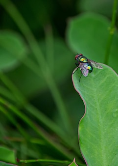 Vertical shot of a fly on a green leaf