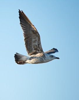 Vertical shot of a flying seagull