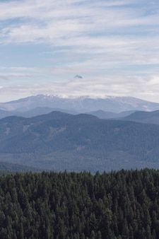 Colpo verticale di uno scenario montuoso nebbioso pieno di alberi della stessa altezza