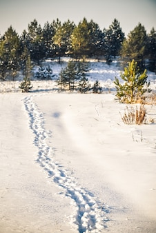 Vertical shot of footprints on snow in the woods