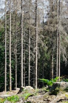 Colpo verticale della foresta in cattive condizioni a causa dei cambiamenti climatici