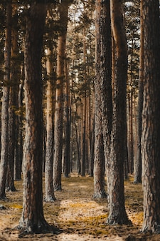 Vertical shot of a forest covered in tall bare trees