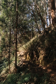 Vertical shot of a forest trail during daytime
