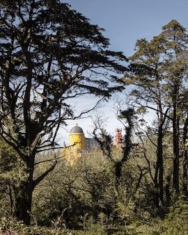 Colpo verticale della foresta con edifici sull'altro lato