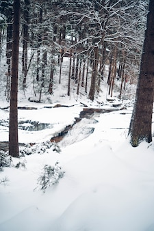 Vertical shot of a forest with tall trees covered with snow