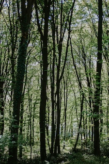 Vertical shot of a forest with tall trees and plants
