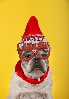 Ripresa verticale di un bulldog francese con occhiali rossi, cappello natalizio e collare rosso