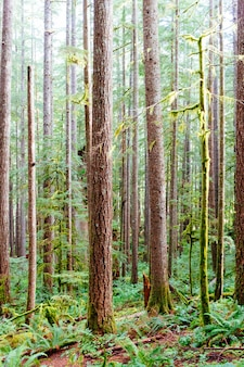 Vertical shot of the gifford pinchot national forest near siouxon creek trail in washington