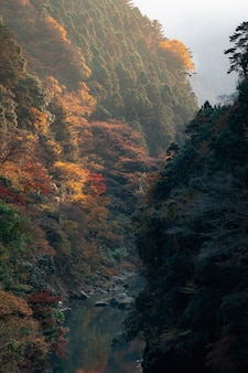 Vertical shot of gorgeous mountain river surrounded by colorful autumnal foliage on a foggy morning
