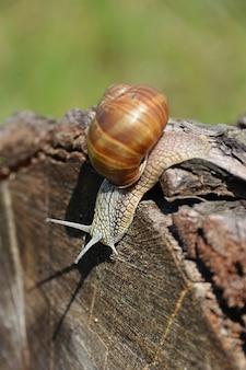 Vertical shot of a grape snail along the log