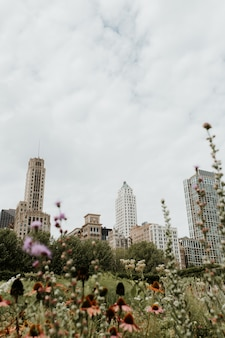 Vertical shot of a grassy field full of flowers in chicago with skyscrapers visible in distance