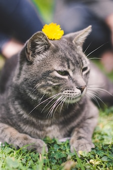 Vertical shot of a gray cat laying on the grass with a yellow flower on its head