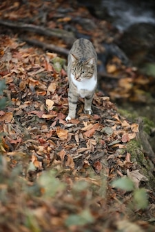 Vertical shot of a gray cat standing on dried leaves