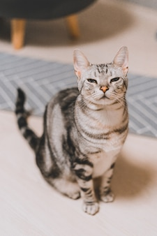 Ripresa verticale di un gatto tabby grigio seduto su una superficie bianca con una faccia assonnata