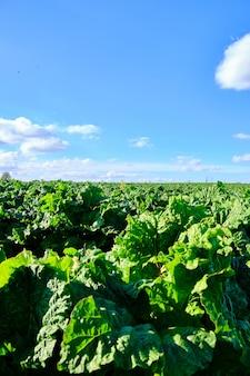 Colpo verticale di una fattoria verde sotto il cielo blu chiaro cattura din west yorkshire, inghilterra