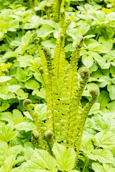 Vertical shot of green ferns growing next to other plants in the field