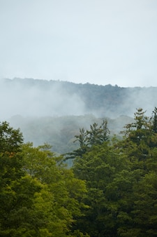 Vertical shot of the green mountain forest  covered in fog in vermont
