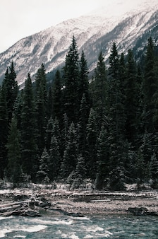 Vertical shot of the green pine trees near the river under the snowy mountains