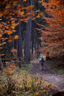 Vertical shot of a hiker walking in the forest in autumn