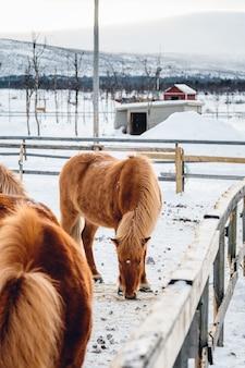 Colpo verticale di un cavallo in una fattoria circondata da staccionata in legno in una giornata nevosa
