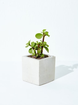 Vertical shot of a houseplant in a concrete flowerpot on a white background