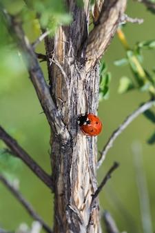 Vertical shot of a ladybug on a tree bark