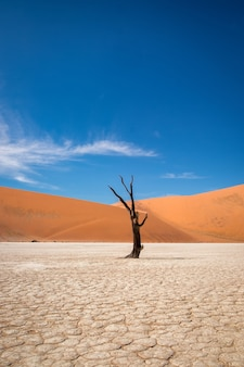 Vertical shot of a leafless tree in a desert with sand dunes in the