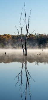 Ripresa verticale di un albero senza foglie che si riflette in un lago con uno sfondo nebbioso