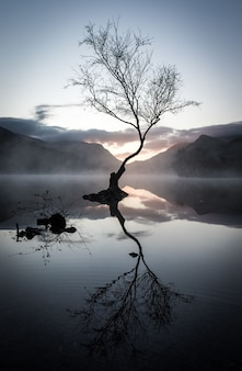 Vertical shot of a leafless tree's reflection on the lake surrounded by mountains at sunset
