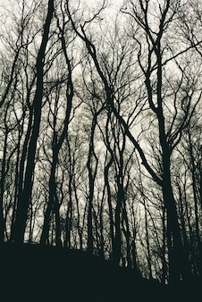 Vertical shot of leafless tree silhouettes in a forest during daytime
