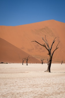 Vertical shot of leafless trees in a desert with tall sand dunes