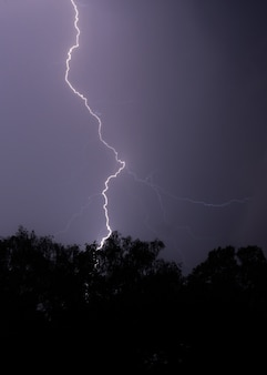 Vertical shot of lightning hitting a tree at night with a purple sky and trees in front