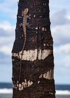 Vertical shot of a lizard on tree trunk