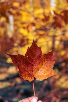 Vertical shot of a maple leaf held against a blurry background