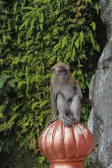 Vertical shot of a monkey on a decorative pumpkin