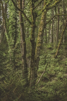Vertical shot of a mossy tree surrounded by green plants in the forest
