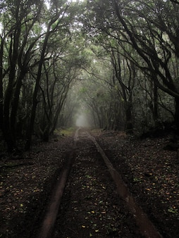 Vertical shot of a muddy pathway in the middle of tall trees with a fog
