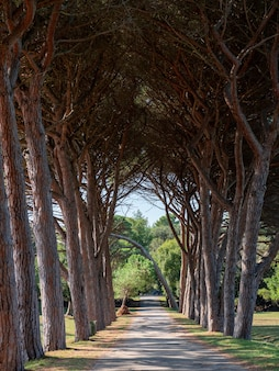 Vertical shot of a narrow pathway with aligned trees on both side with branches tangled