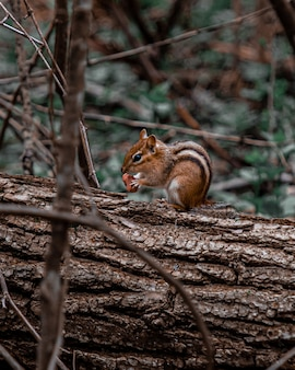 먹는 동안 나무에 아기 다람쥐의 세로 샷
