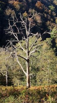 森の中の裸木の垂直ショット