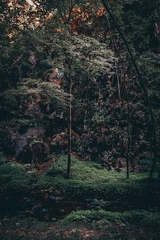 저녁에 높은 다채로운 잎이 많은 나무와 아름다운 숲의 세로 샷