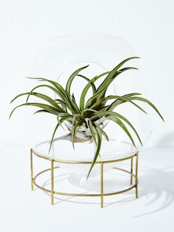Вертикальный снимок красивого комнатного растения в горшке на белом